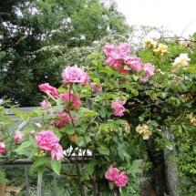 the_garden_1